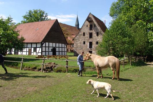 Pferdeansicht 010kl.jpg
